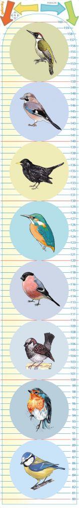Samolepící nástěnný metr: Naši ptáci