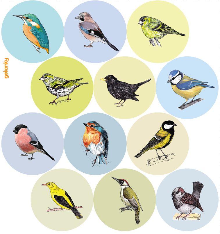 Veselé puntíky: Naši ptáci